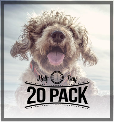 No Bones About It - Site Logo - Half Day Doggy Daycare 20 Pack